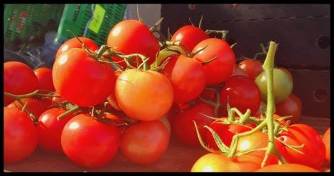 blushing tomatoes