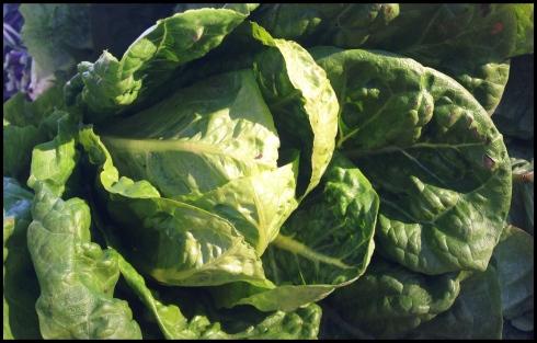 coz lettuce
