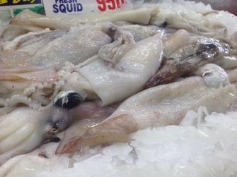 beautiful squid